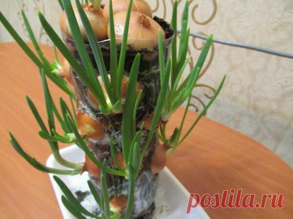 Поделюсь, как я выращиваю вертикально лук на зелень, экономя место на подоконнике в 7 раз. | Огородные дела | Яндекс Дзен