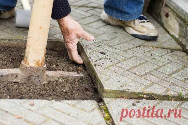 Профилированная мембрана для садовых дорожек: для чего нужна и как укладывать