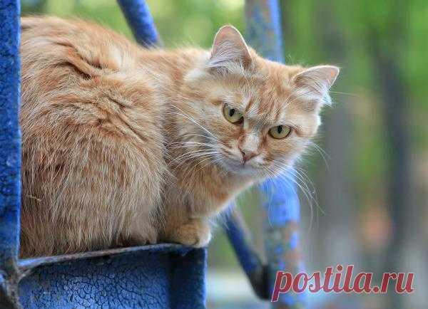 Фотография Рыжий из раздела животные - фото.сайт - Photosight.ru
