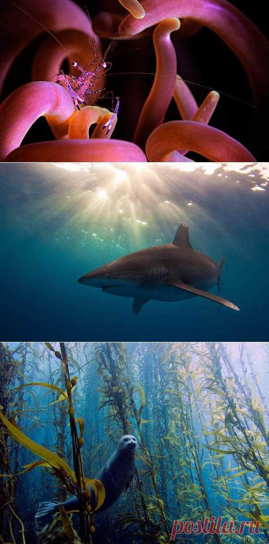 Победители конкурса подводной фотографии University of Miami's 2013 Underwater Photography