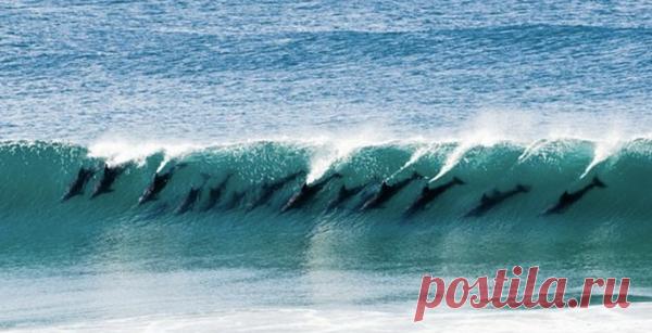 стая дельфинов в гребне волны