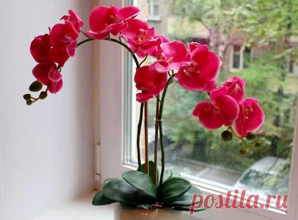 Как пересадить орхидею? Правильная пересадка и полив орхидеи пошагово
