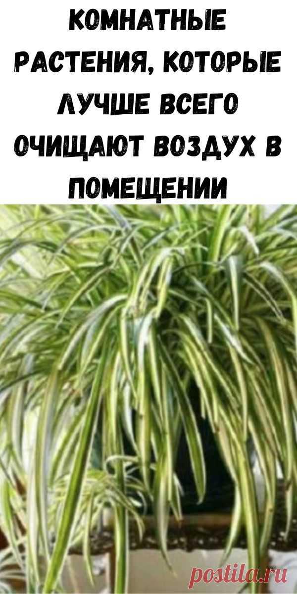 Комнатные растения, которые лучше всего очищают воздух в помещении - Советы на каждый день