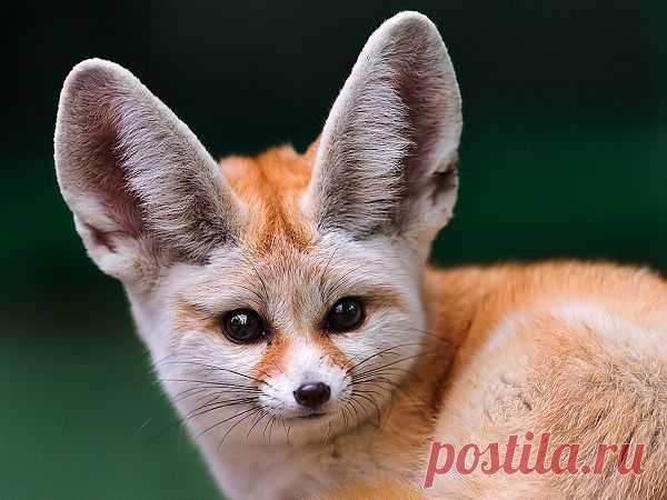 Животные – детеныши пустыни http://superinteres.mirtesen.ru/blog/43100557912