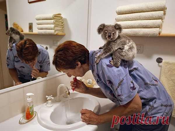 Естественное поведение коалы - обнимать маму или человека, который заботится о нем. С этим ничто не сравнится