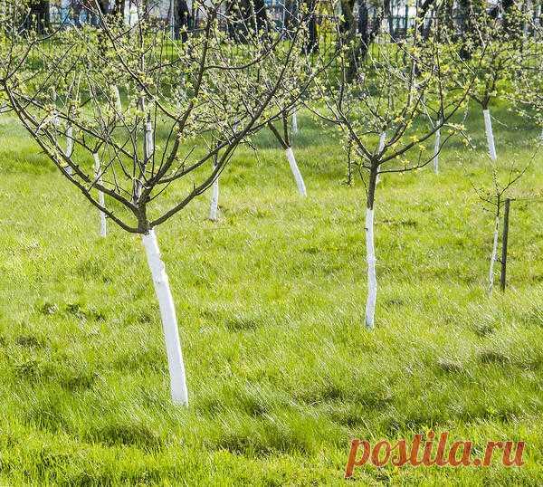 7 супер-смесей для побелки деревьев, которые не ударят по карману