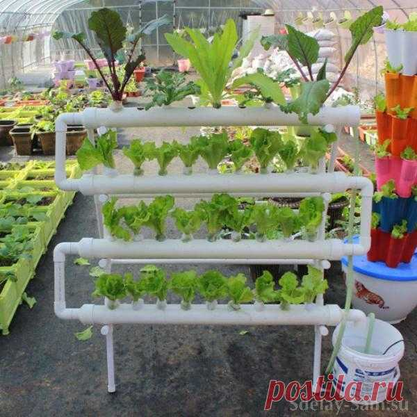 Cultivation of plants on beds from plastic pipes.