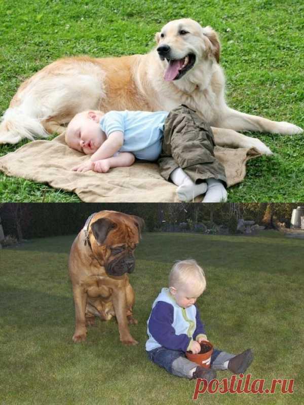 Собака и ребенок. Статья о том, чему надо научить малыша