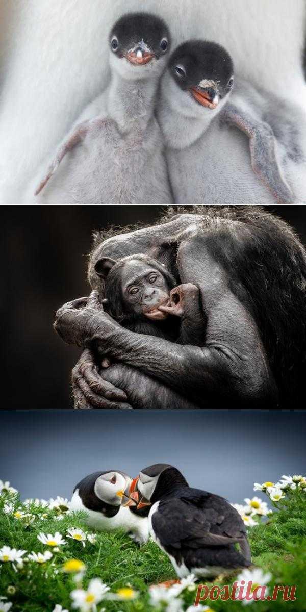 Шедевры звериной фотографии от National Geographic