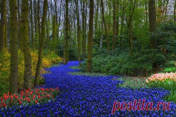 Сад Keukenhof Gardens в Нидерландах