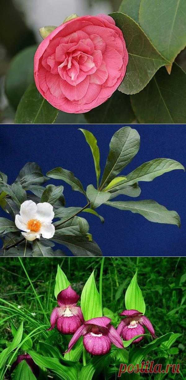 Самые редкие цветы в мире.