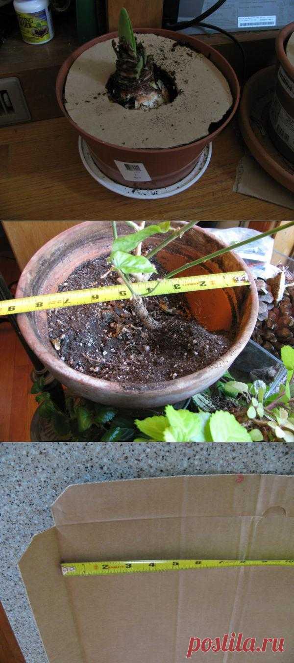 Очень полезное и удобное приспособление для домашних растений, защищающее от котов и улучшающее полив луковичных цветов.