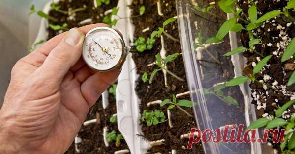 6 основных ошибок при выращивании рассады При выращивании рассады даже самые опытные огородники нередко допускают ошибки, которые приводят к плохой всхожести семян и гибели растений. Обратите внимание на то, чего нельзя делать, если вы хотите получить здоровую рассаду.