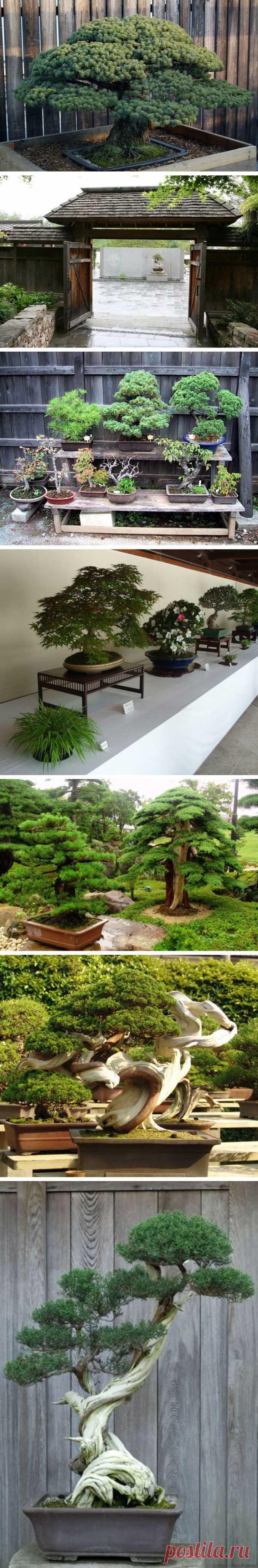 Необычный музей «Такаги» в Японии – музей бонсая