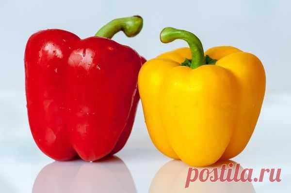 Как выбрать сорта сладкого перца / перец / 7dach.ru