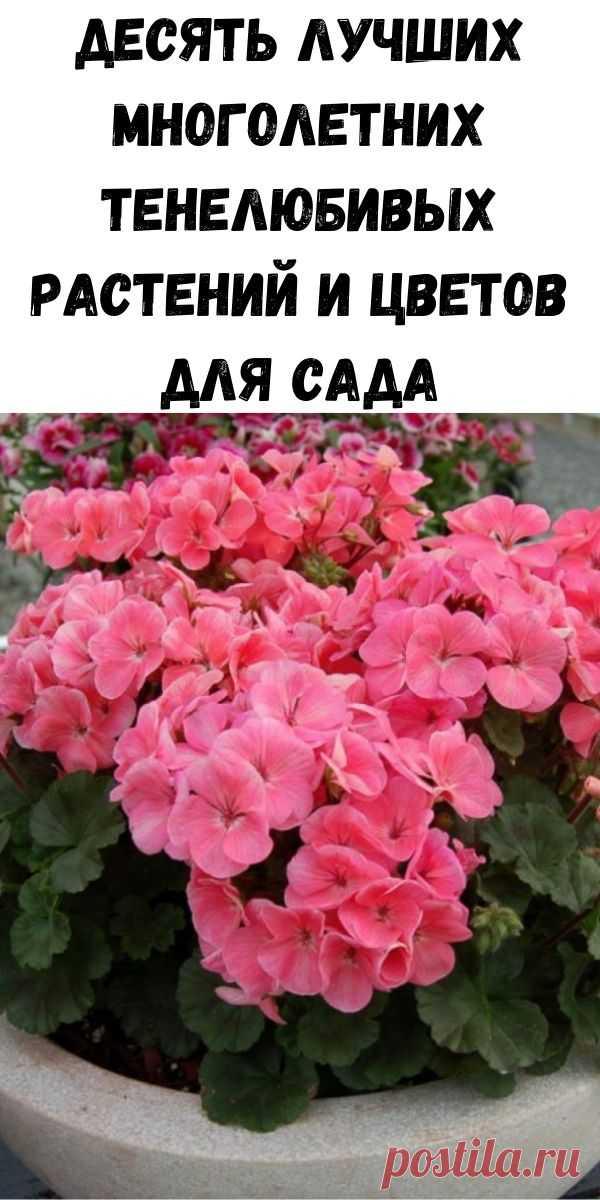 Десять лучших многолетних тенелюбивых растений и цветов для сада - Полезные советы красоты