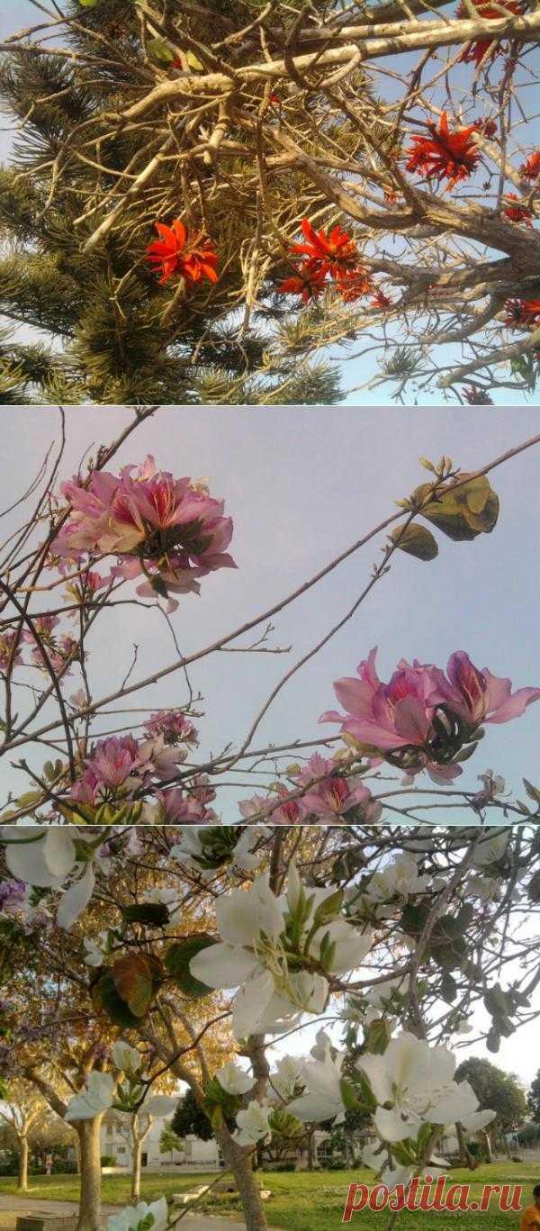 Цветы экзотических растений.