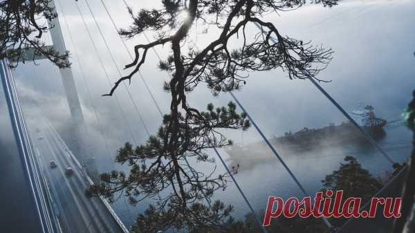 Будьте тигром, а не котенком