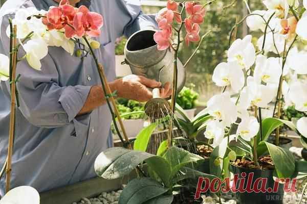 Дотримуйся ці 9 правил і твоя орхідея буде цвісти цілий рік  9a951b0d7a31f