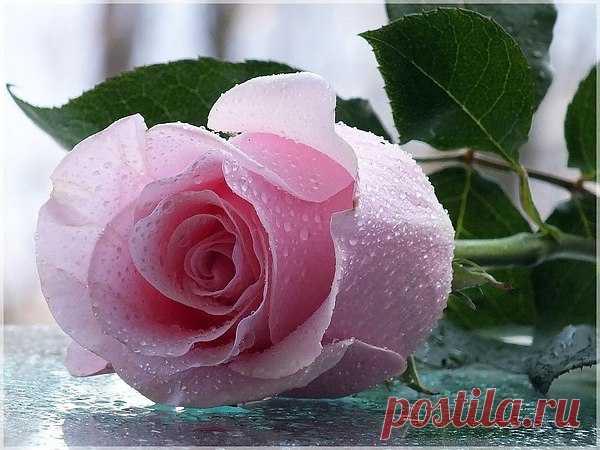 User's photo Lilia, Cherkasy, 62 years