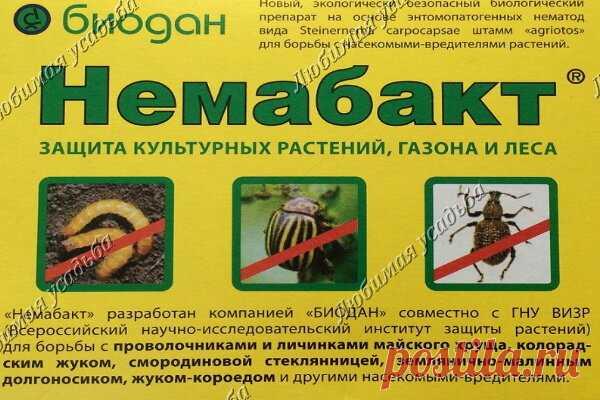 Как бороться с майским жуком или хрущем   Любимая усадьба   Яндекс Дзен