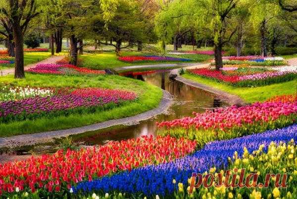 Лучшие фотографии со всего света - Цветение тюльпанов по всему миру