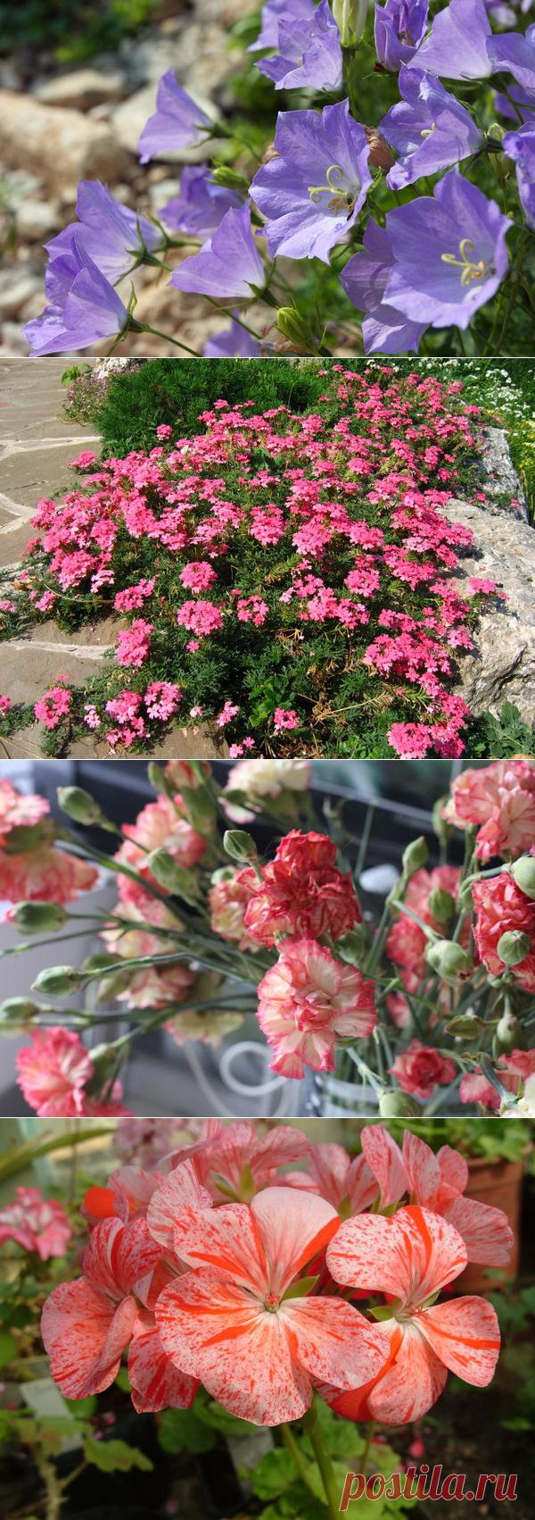 какие цветы сеять в январе на рассаду