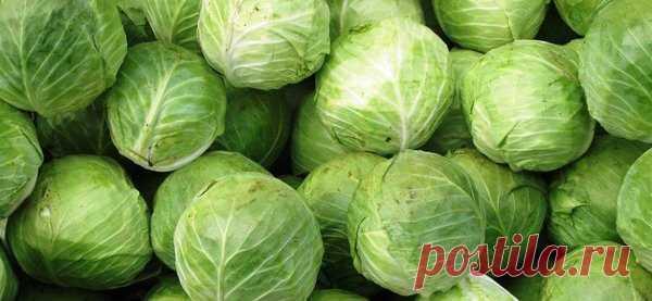 Жиросжигающий салат для похудения №32:  Салат из свежей капусты для осиной талии | Похудение и стройная фигура | Яндекс Дзен