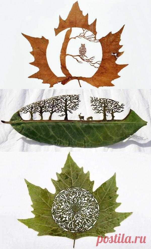 Невероятные картины из совершенно обыкновенных листьев