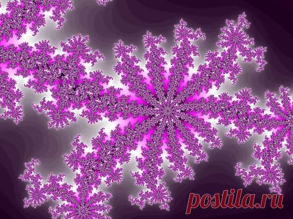 Lilac Fractal  Free Stock Photo HD - Public Domain Pictures