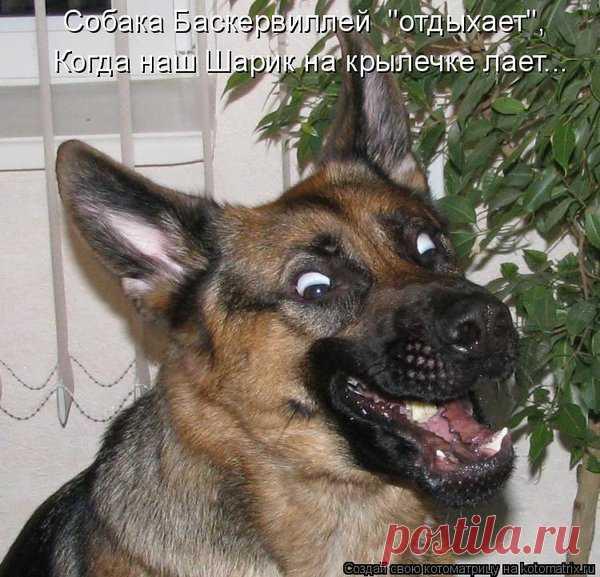 Смешные фото собак с надписью, открытки