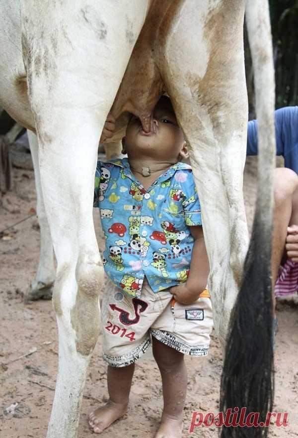 Como es necesario beber la leche