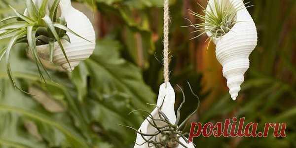 Цветы, вазы и цветочные горшки / ВТОРАЯ УЛИЦА