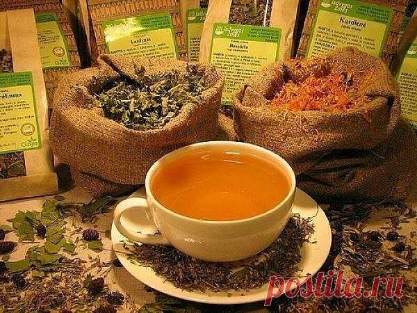 BROTH OF HERBS FOR STRENGTHENING OF VESSELS\u000a\u000aBroth on the basis of a combination of curative herbs will help you to strengthen vessels, especially it is actual for having diabetes and vegetososudisty dystonia, and also all that who is tormented by headaches from an overstrain and a stress.\u000a\u000aCurative grass broth – the unique recipe:\u000a\u000aIt is necessary to mix in equal proportions a pustyrnik, a St. John's Wort, roots of a valerian and leaves of a melissa, two tablespoons of mix of herbs to fill in 300 ml of the boiling water, we insist in those...