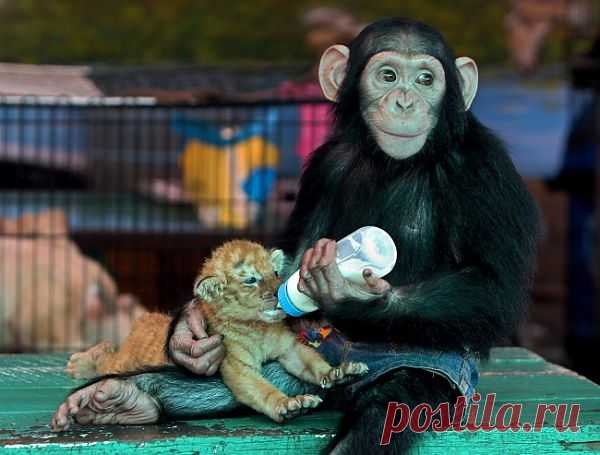 Самые удивительные снимки животных, которые вызывают приступ нежности и улыбку на лице.