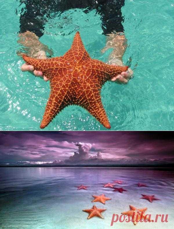 Пляж морских звезд — Бока дель Драго