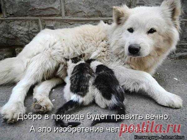 материнство...