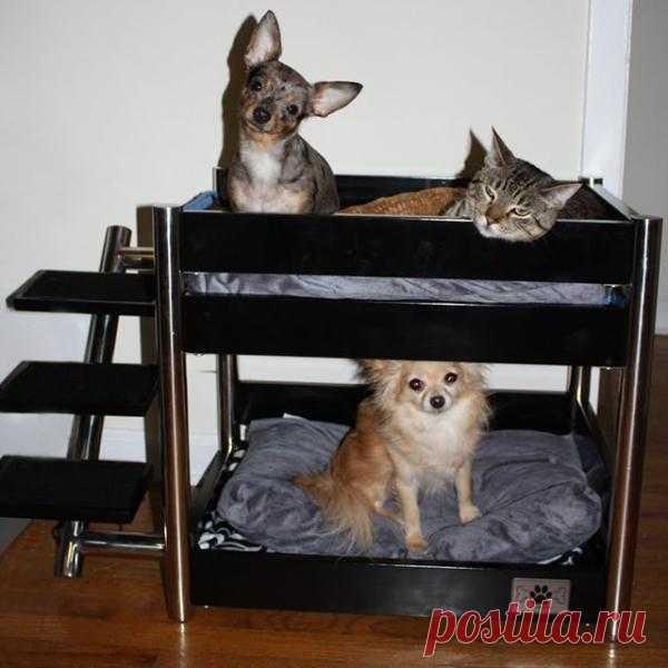 """двухэтажная """"кровать"""" для животных - $250"""
