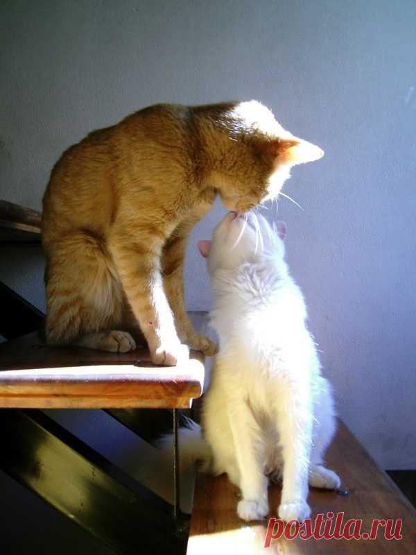 А вы не забыли утром поцеловать своих любимых? По ссылке еще много поцелуев