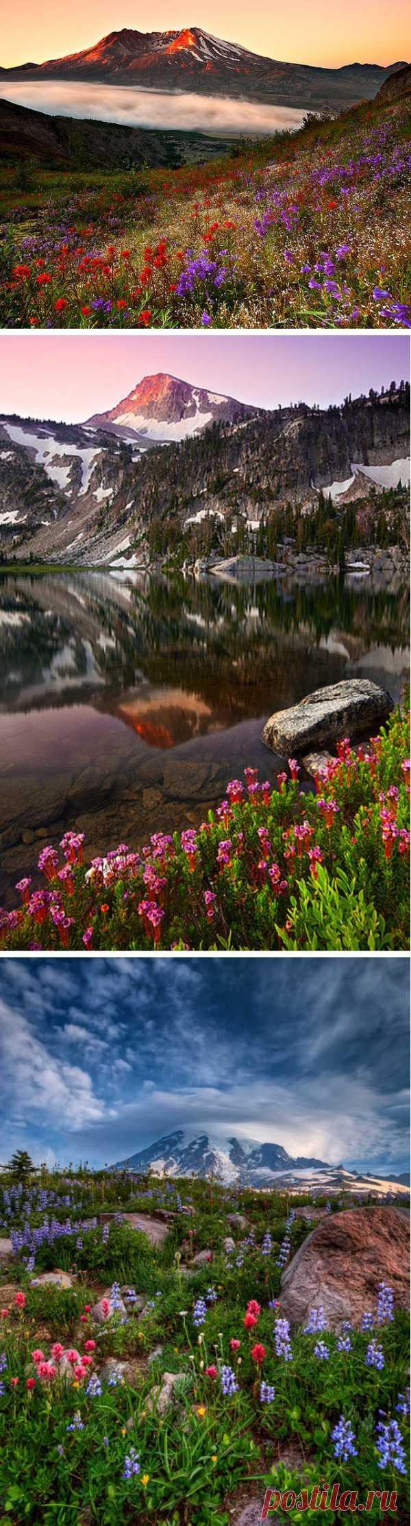Las flores y las montañas. ¡La combinación de un modo excepcional hermosa!