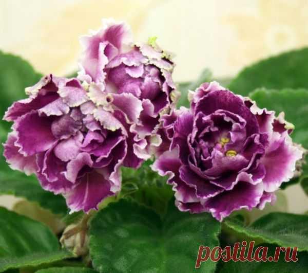 Розовый сад картинки коммунальная