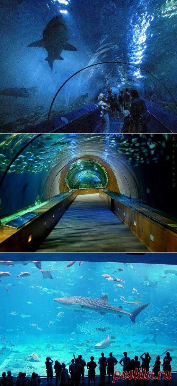 Самые большие аквариумы в мире | В отпуск хочу!