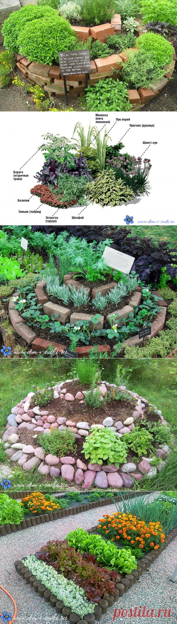 Как великолепно можно вырастить пряные травы на огороде.   Красивый Дом и Сад