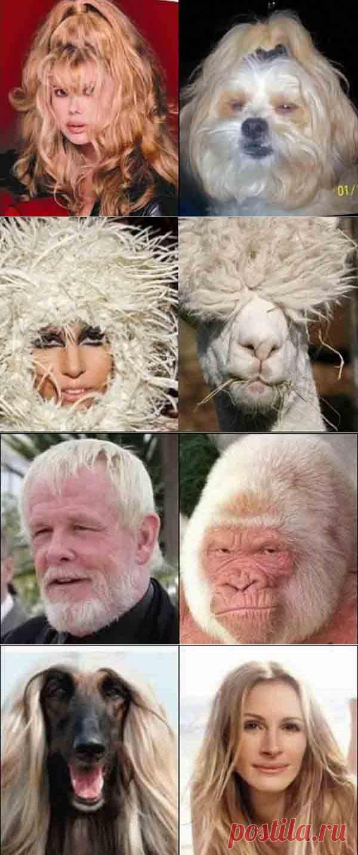 нее сравнение людей и животных фото вне зависимости