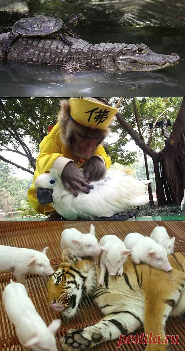 Странные парочки животных | Fresher - Лучшее из Рунета за день
