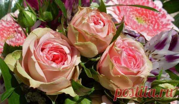 Народные способы подкормки роз для пышного цветения | Сад, дом, огород | Яндекс Дзен