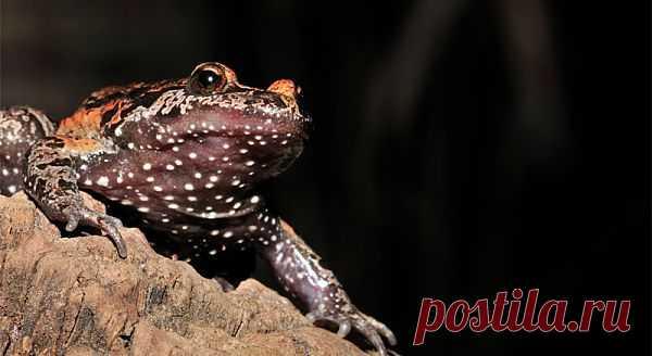 красивая-лягушка-озера-Хула_2. http://udivitelnoe.mirtesen.ru/blog/43435754261