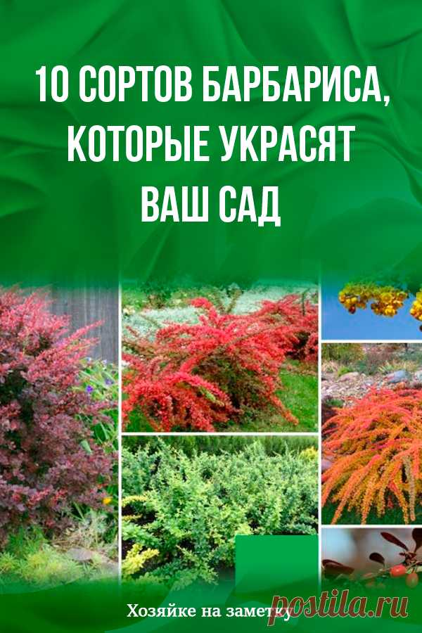 10 grades of a barberry which will decorate your garden