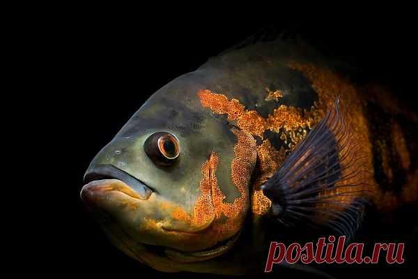 http://aquariumistika.mirtesen.ru/blog/43922158887