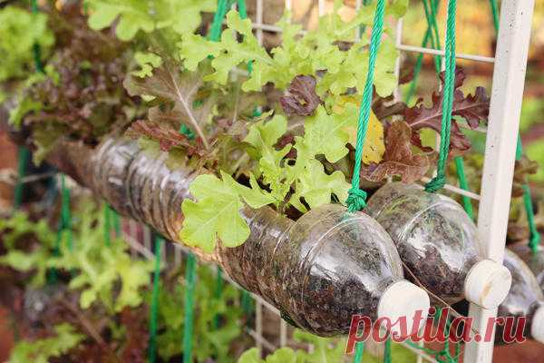 21 ideas of use of plastic bottles at the dacha. Hand-made articles from plastic bottles